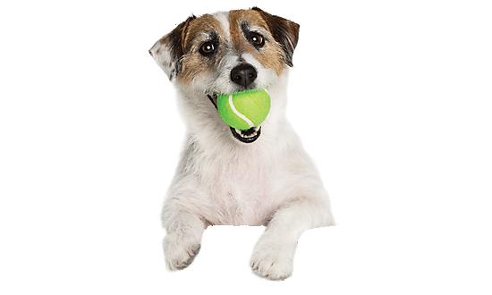 Dog Backgrounds, Compatible - PC, Mobile, Gadgets| 550x330 px