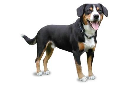 Dog HD wallpapers, Desktop wallpaper - most viewed