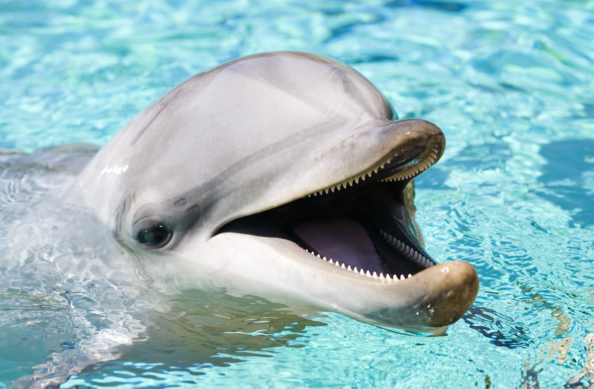 Dolphin Backgrounds, Compatible - PC, Mobile, Gadgets| 2048x1340 px