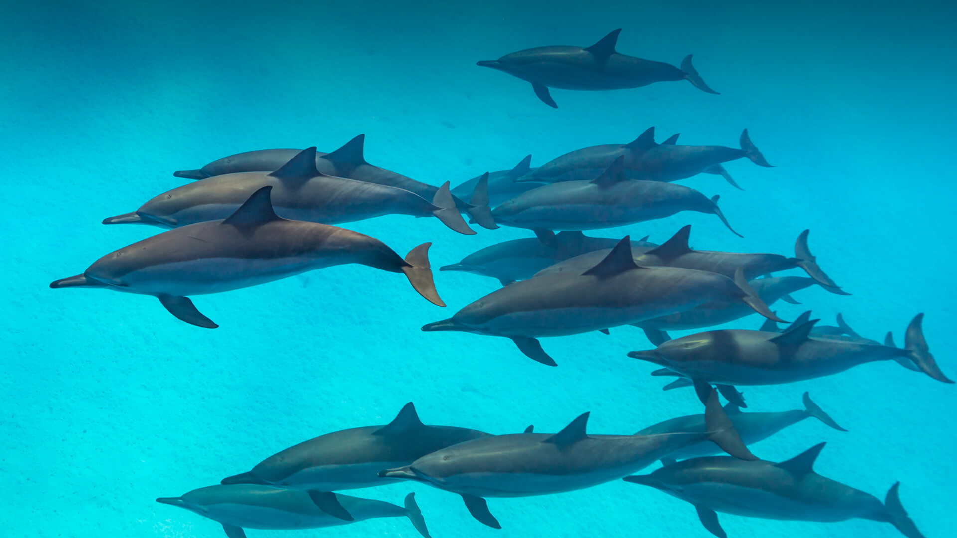 Dolphin Pics, Animal Collection
