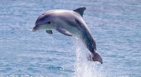 Amazing Dolphin Pictures & Backgrounds