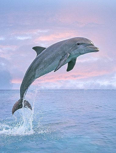 Nice wallpapers Dolphin 380x500px