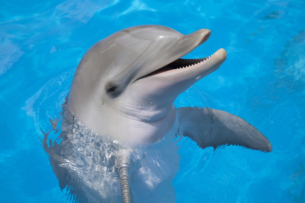 Nice Images Collection: Dolphin Desktop Wallpapers