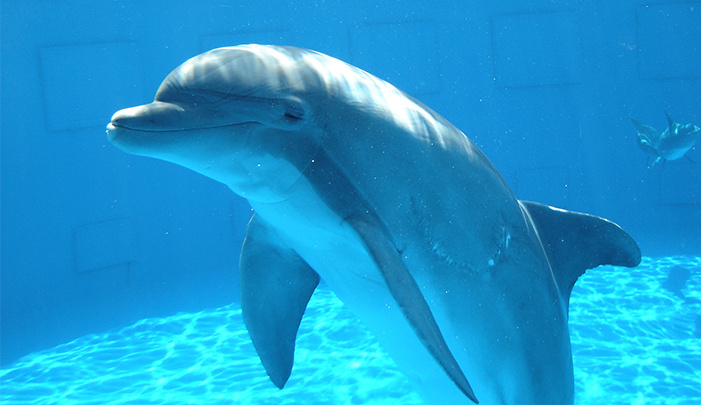 Dolphin High Quality Background on Wallpapers Vista