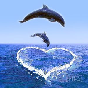 300x300 > Dolphin Wallpapers