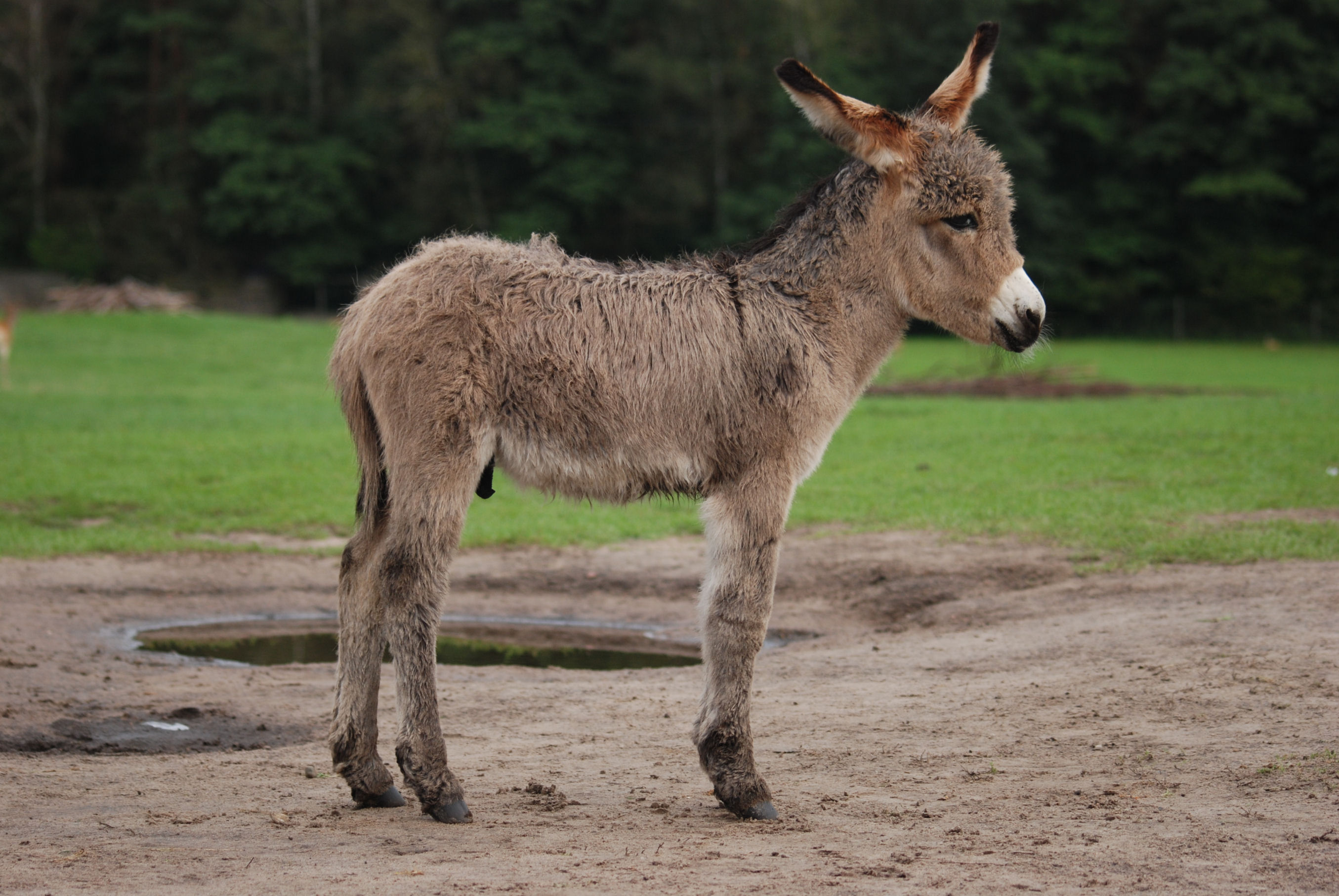Nice wallpapers Donkey 2710x1814px