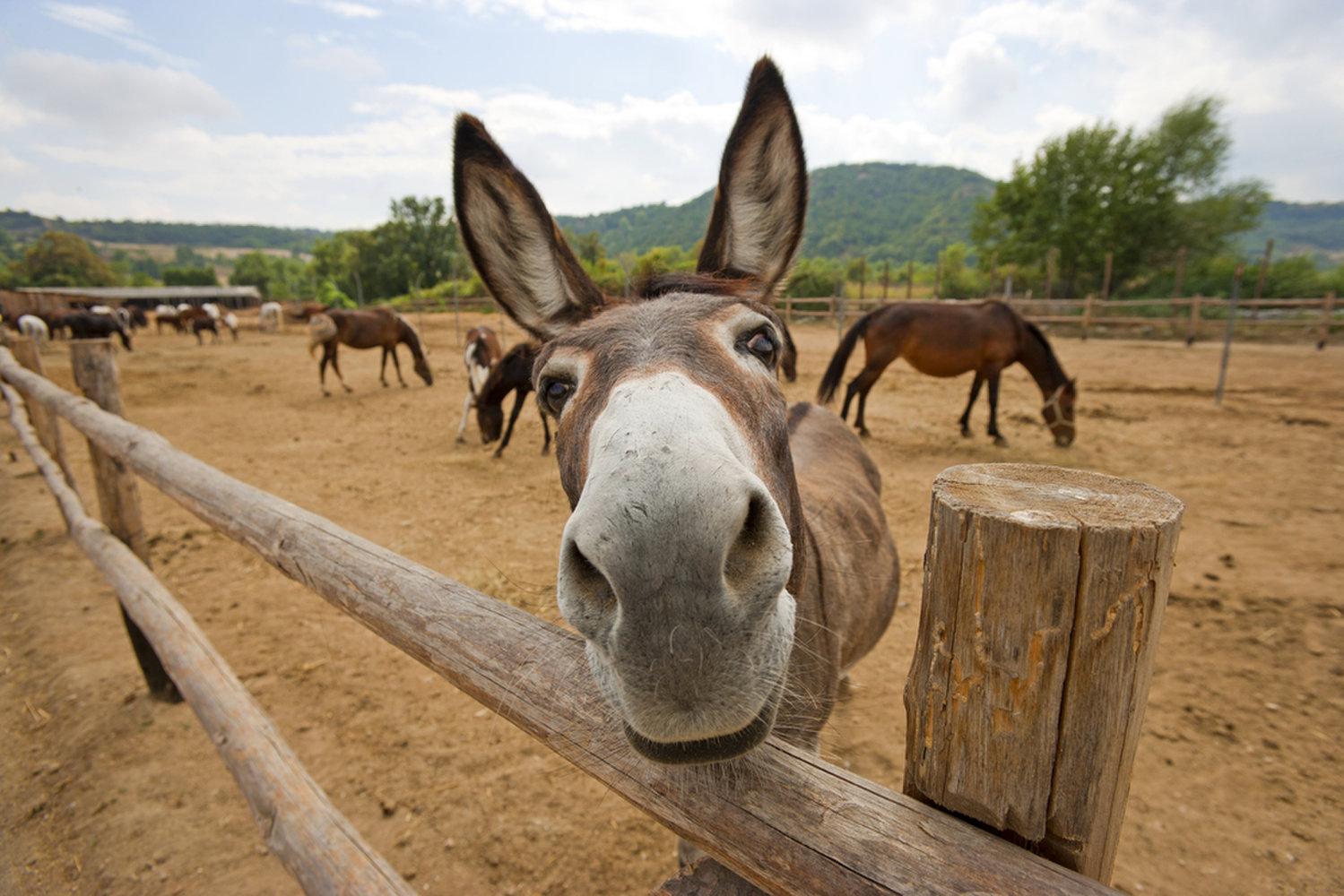 Donkey Pics, Animal Collection