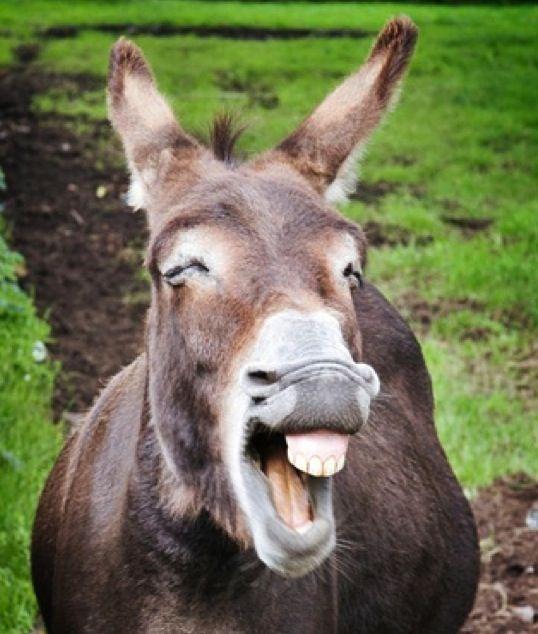 Amazing Donkey Pictures & Backgrounds