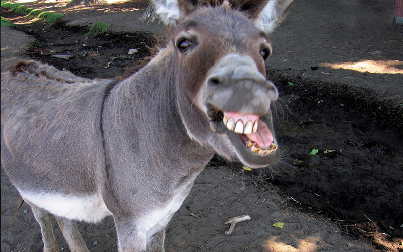 Images of Donkey | 800x500