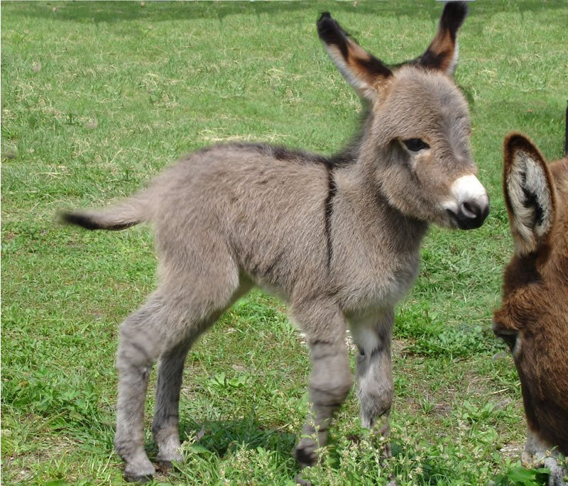 Donkey Backgrounds, Compatible - PC, Mobile, Gadgets| 800x685 px