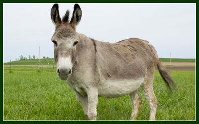 Donkey Backgrounds on Wallpapers Vista