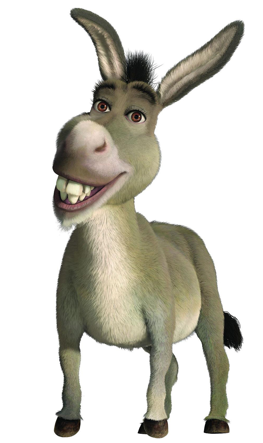 Donkey Backgrounds, Compatible - PC, Mobile, Gadgets| 1000x1685 px