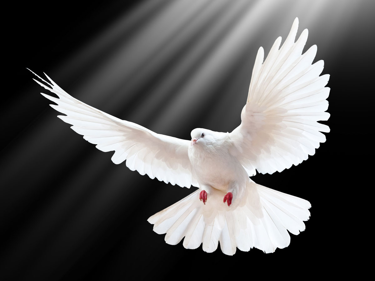 HQ Dove Wallpapers | File 75.4Kb