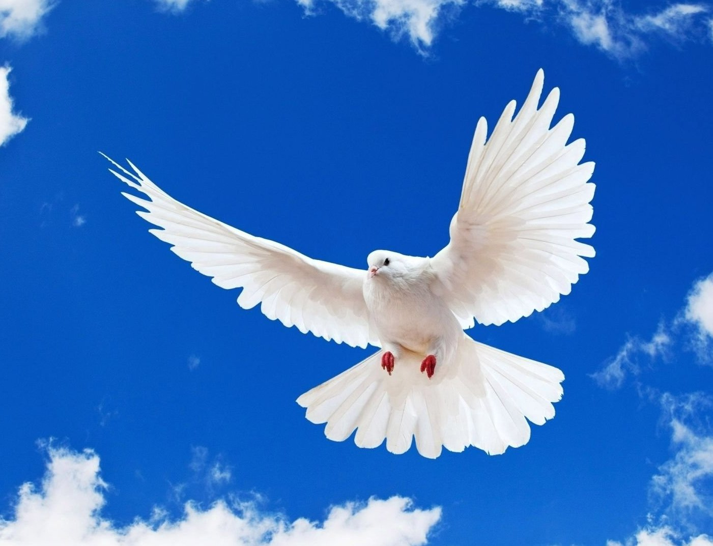 Dove High Quality Background on Wallpapers Vista