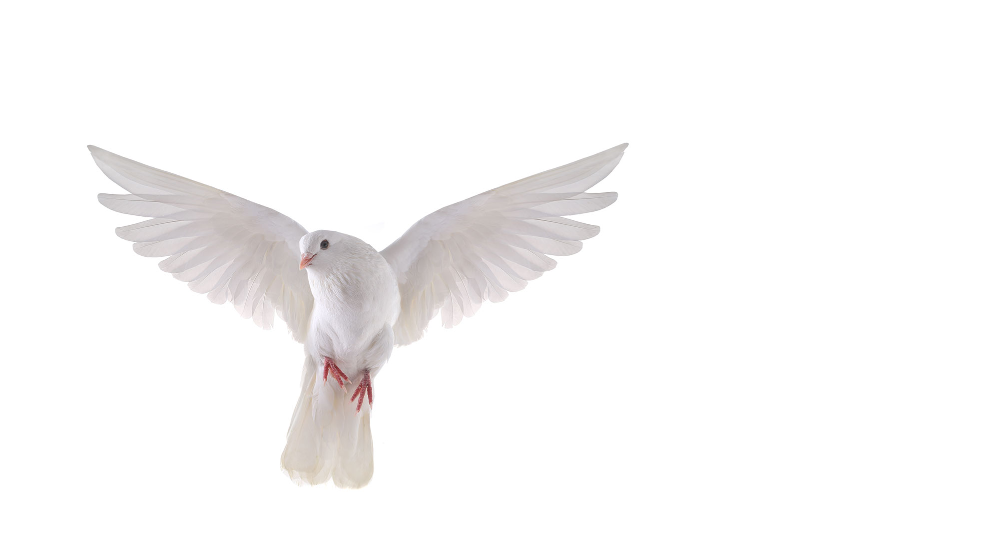 Amazing Dove Pictures & Backgrounds