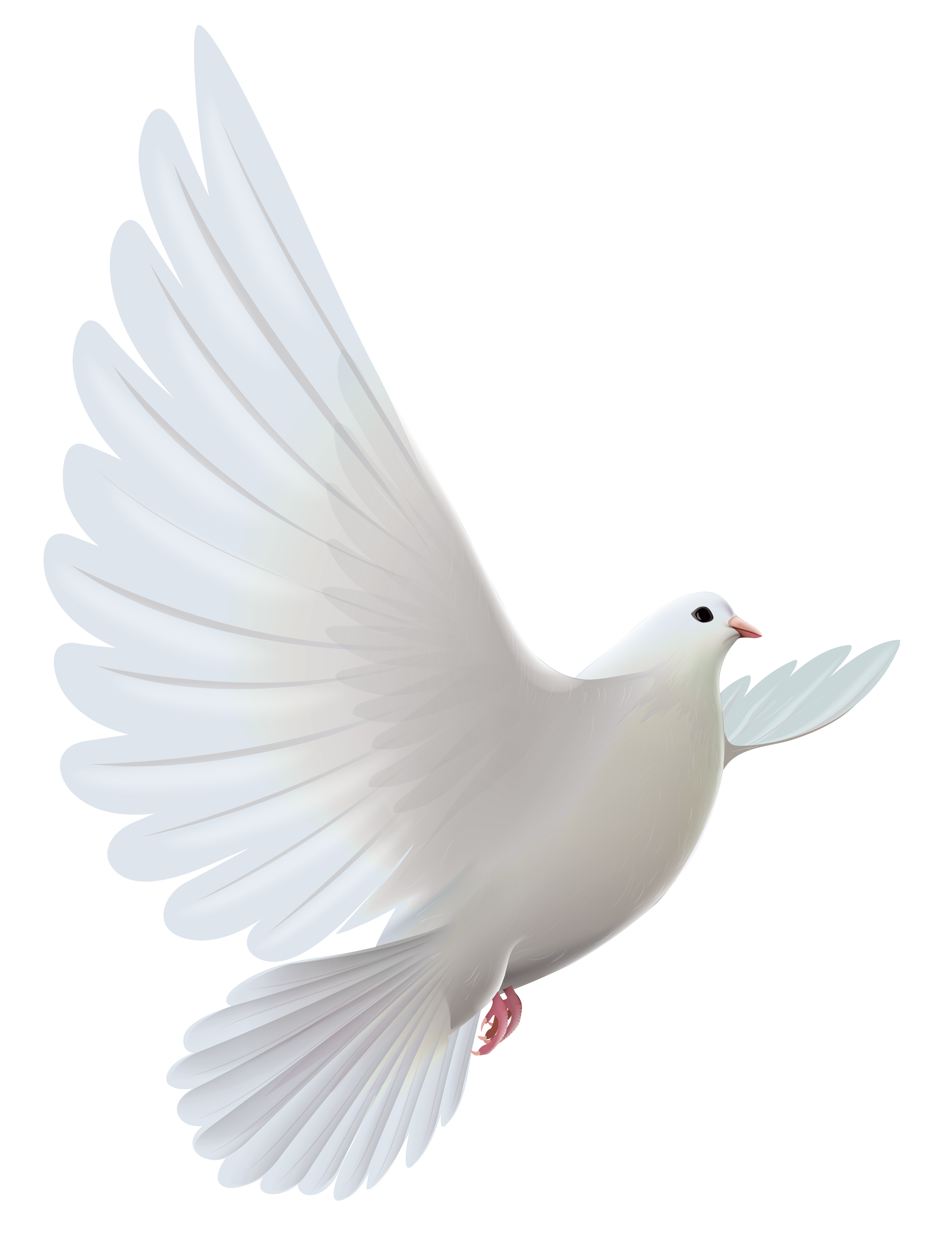 Dove Backgrounds on Wallpapers Vista