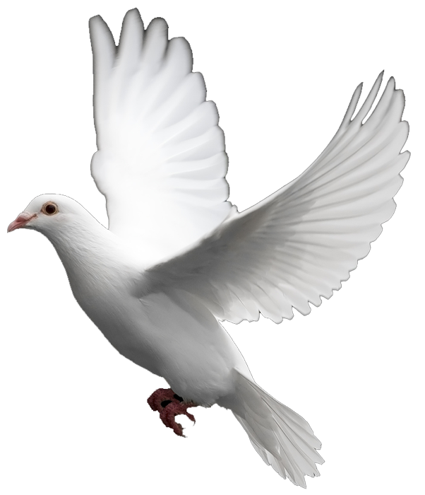 Nice wallpapers Dove 602x700px