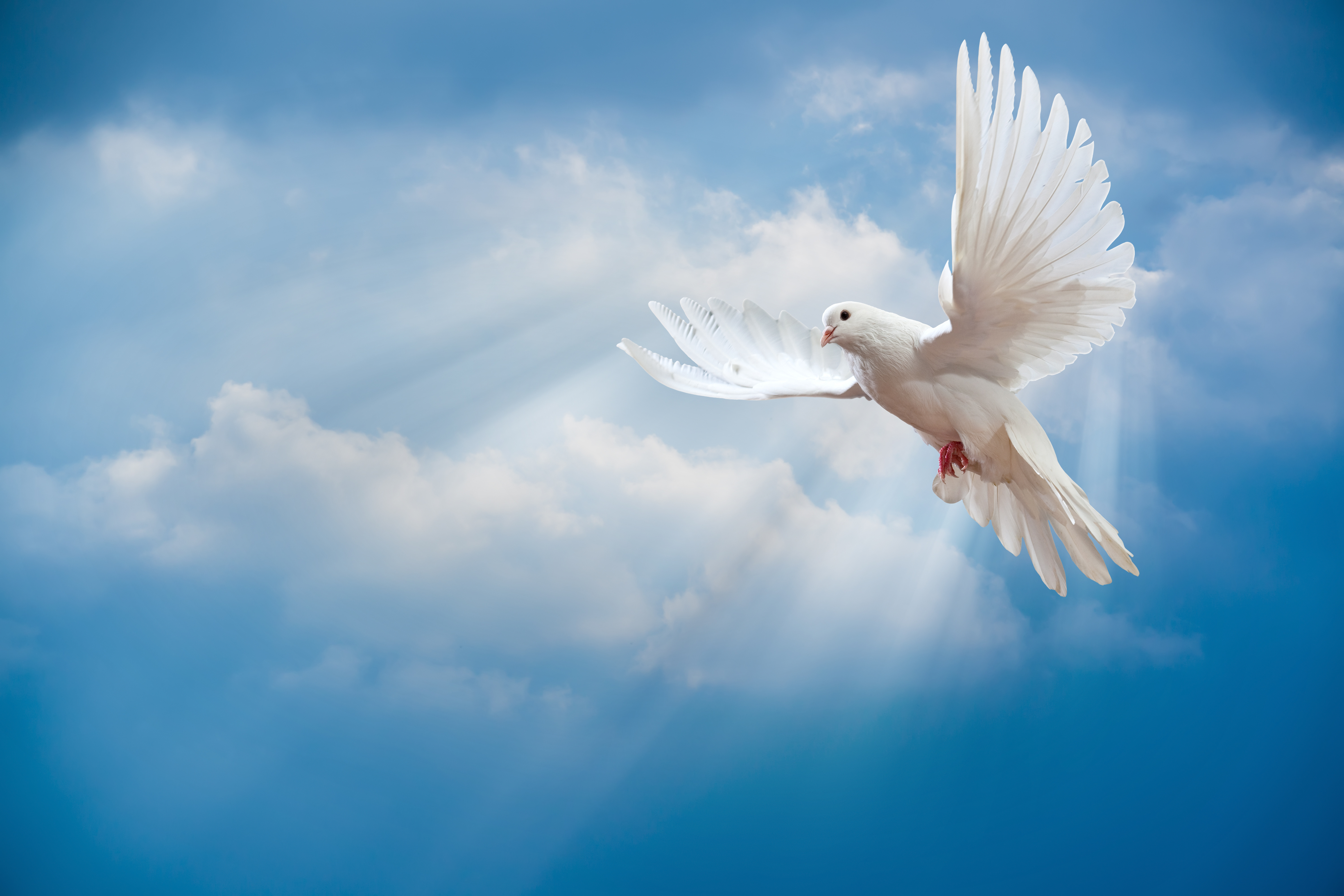 Nice Images Collection: Dove Desktop Wallpapers