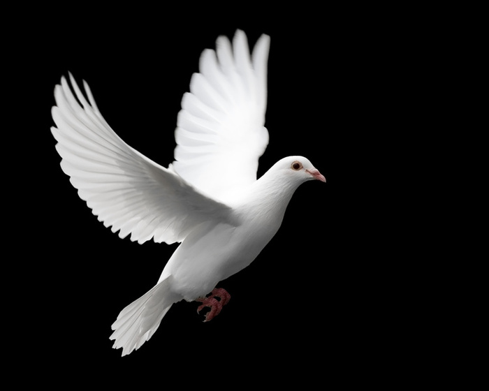 Images of Dove | 700x560