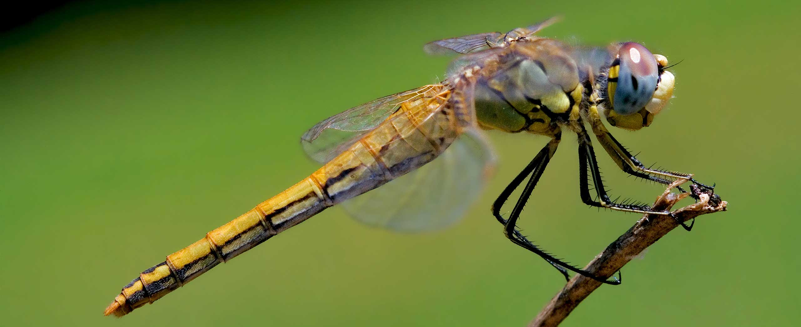 Images of Dragonfly | 2560x1046
