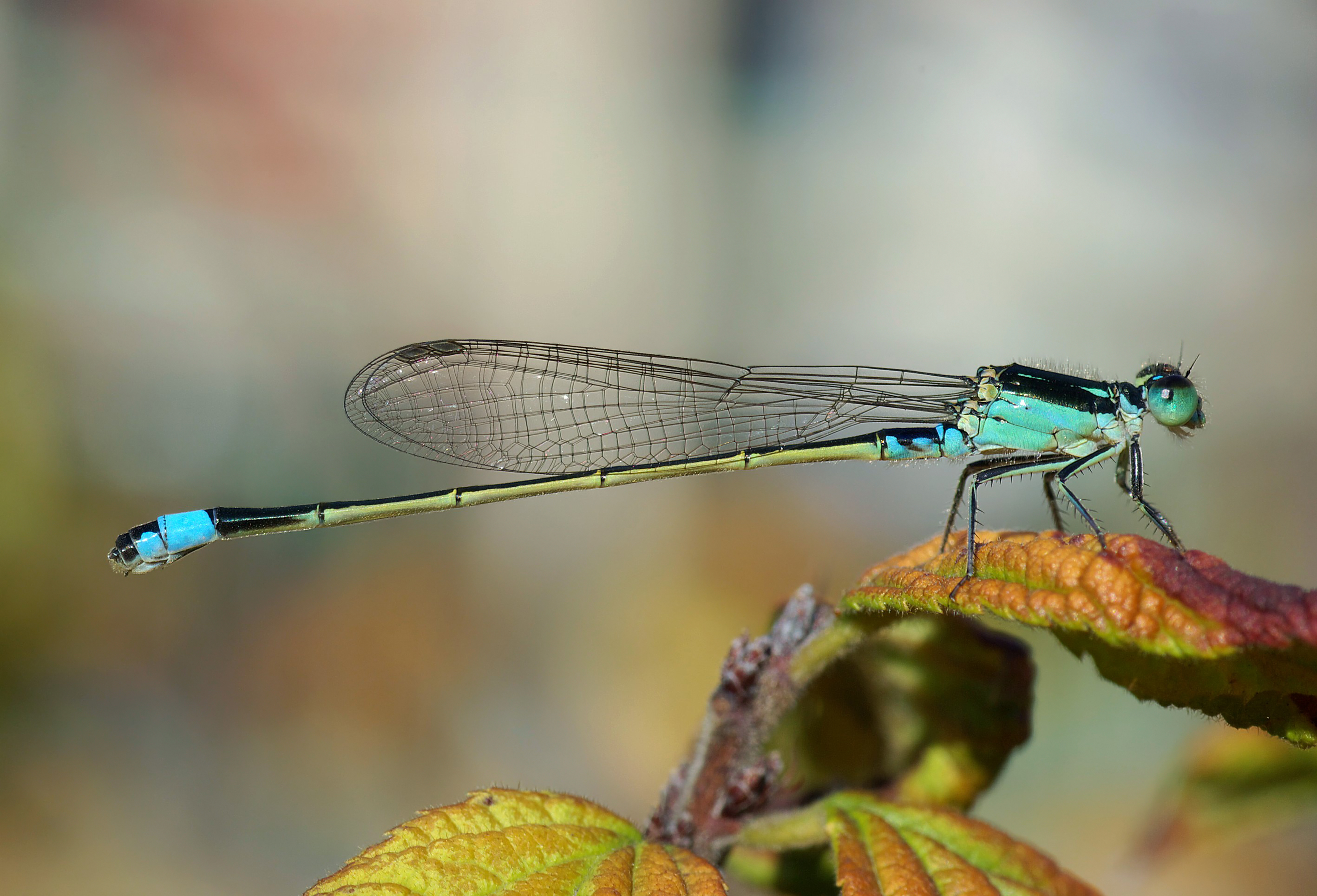 Dragonfly Pics, Animal Collection