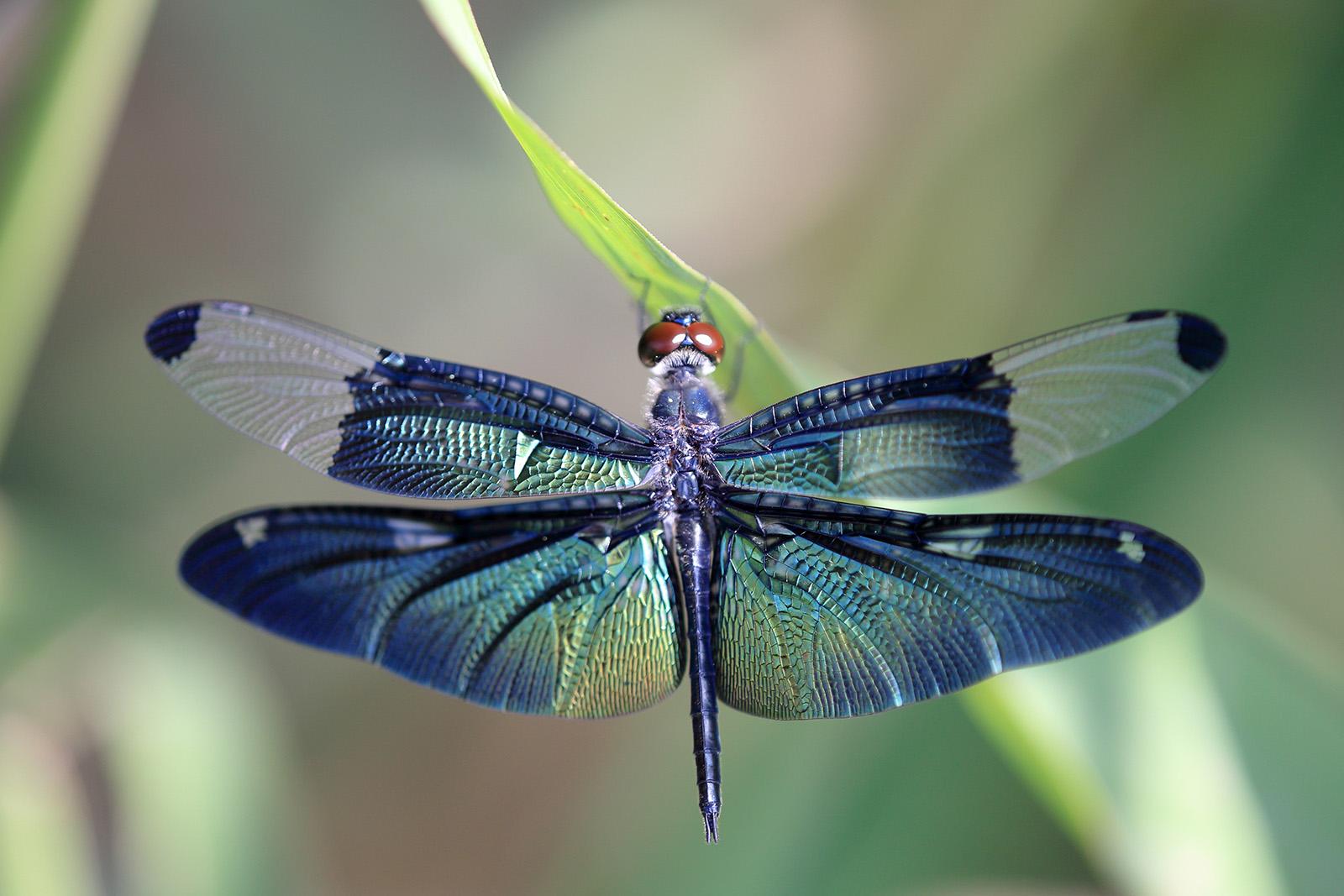 Dragonfly HD wallpapers, Desktop wallpaper - most viewed