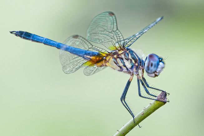 Nice wallpapers Dragonfly 653x435px