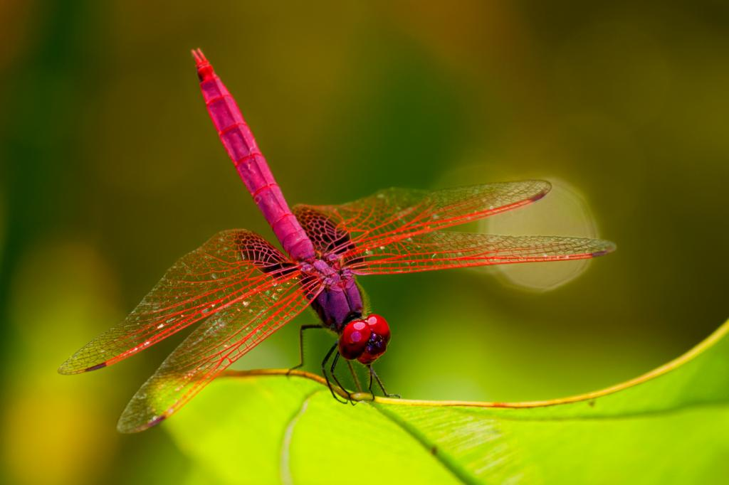Images of Dragonfly | 1024x682