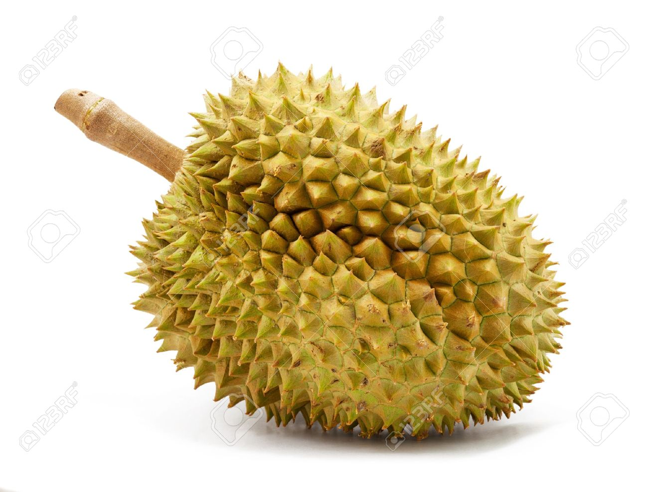 Durian Backgrounds, Compatible - PC, Mobile, Gadgets| 1300x987 px