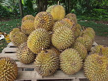 Durian High Quality Background on Wallpapers Vista