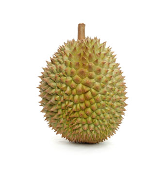 340x354 > Durian Wallpapers