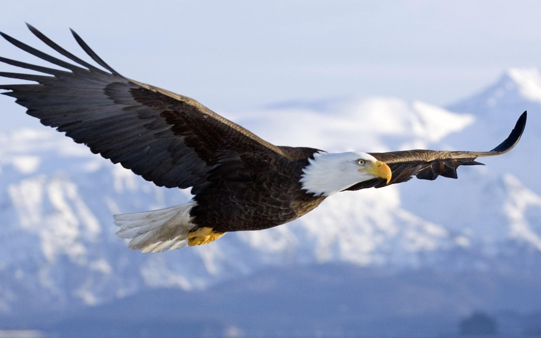 Eagle #7