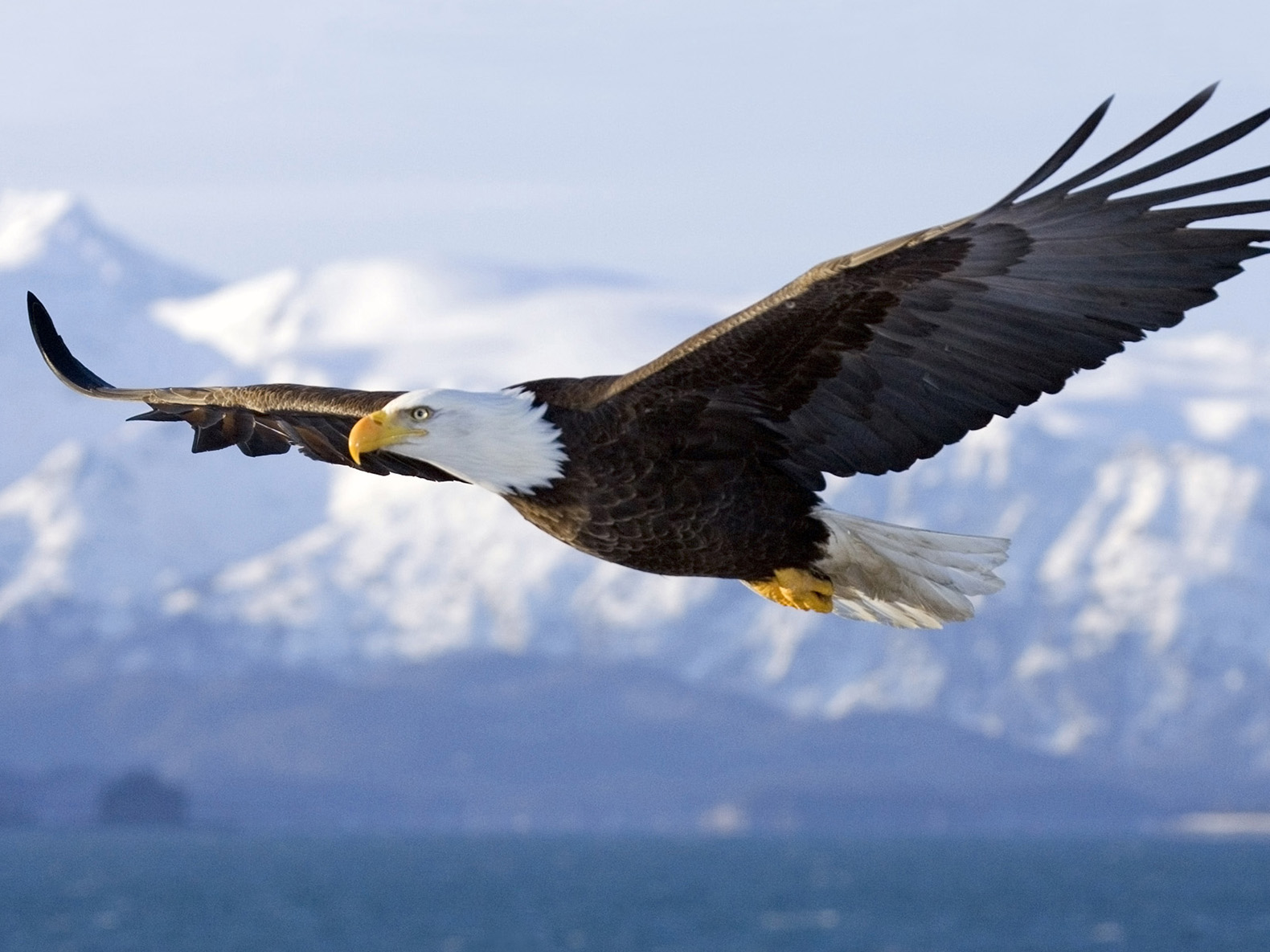 Amazing Eagle Pictures & Backgrounds
