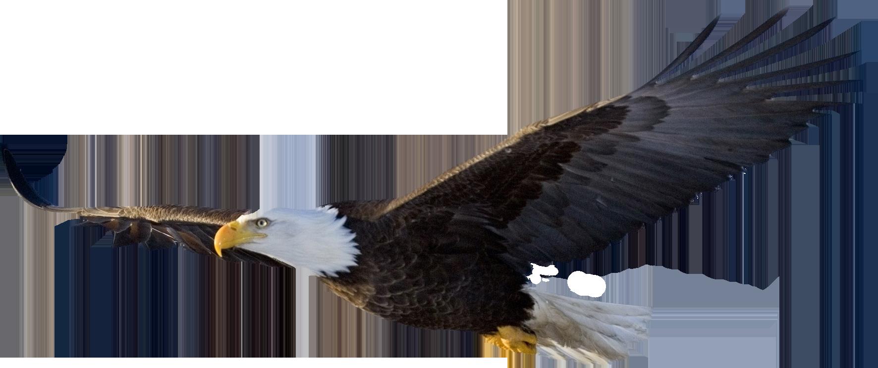 Eagle Backgrounds, Compatible - PC, Mobile, Gadgets| 1772x743 px