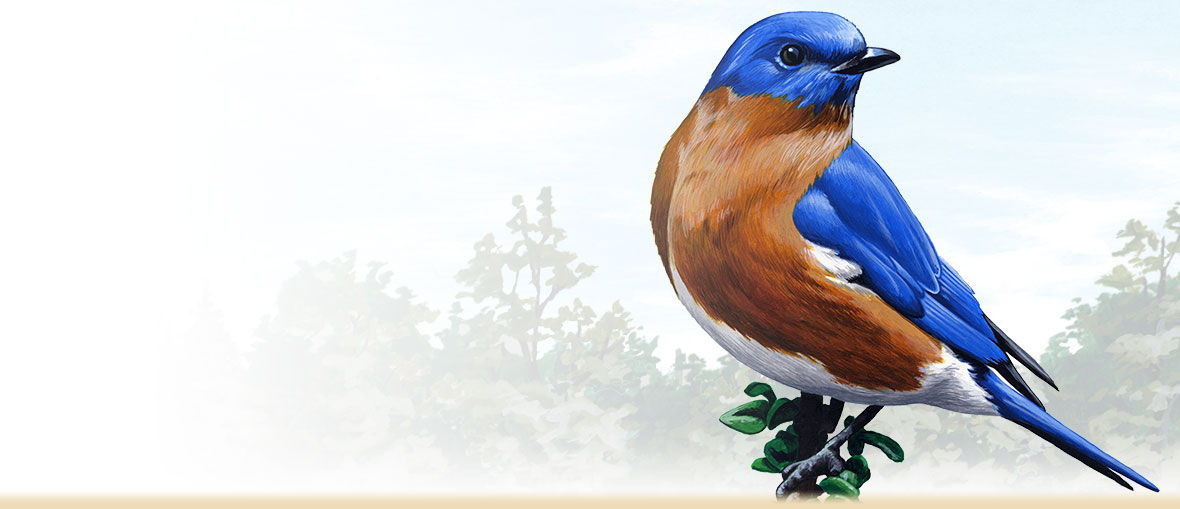 1180x509 > Eastern Bluebird Wallpapers