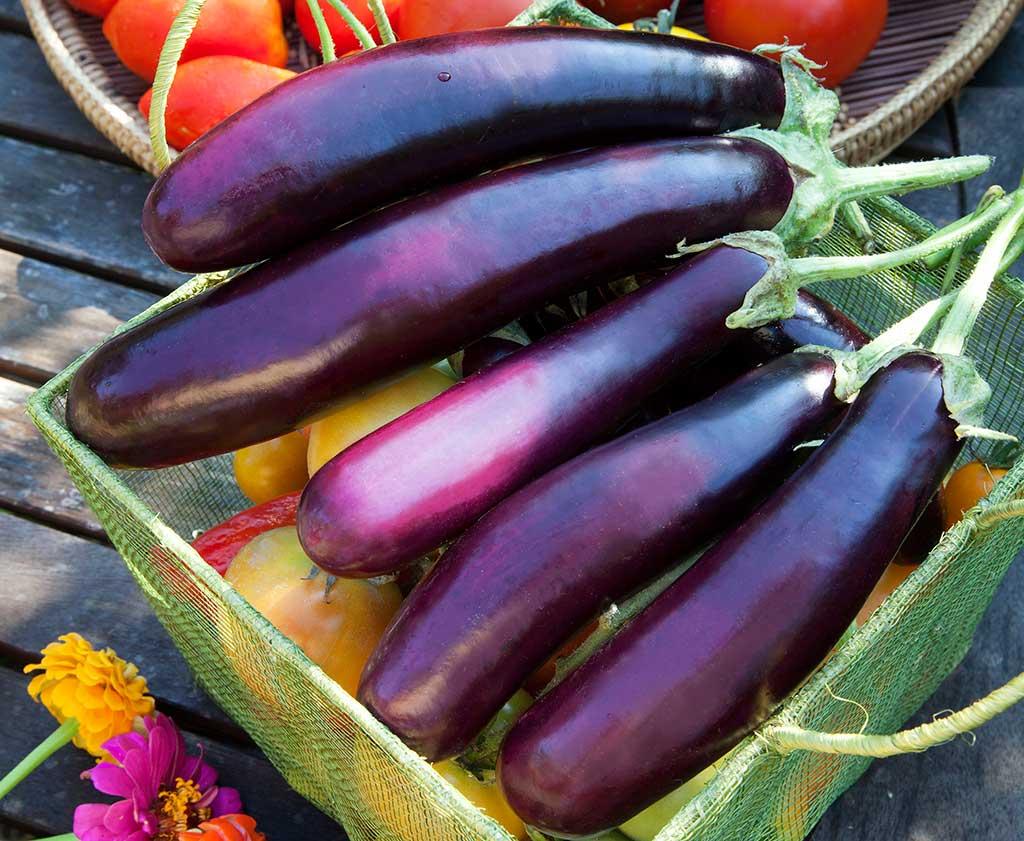 Eggplant Backgrounds, Compatible - PC, Mobile, Gadgets  1024x841 px