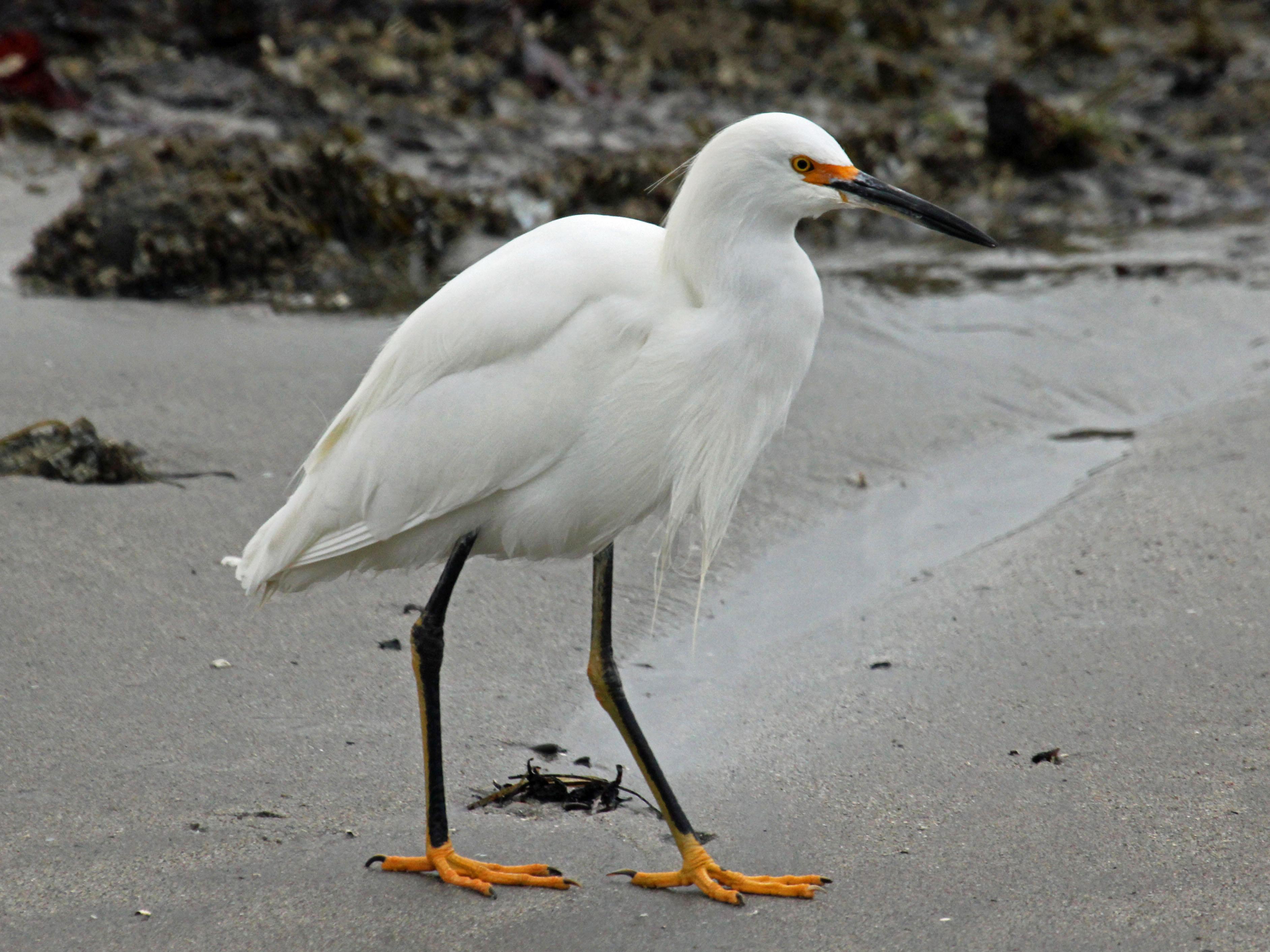 Images of Egret | 3767x2825
