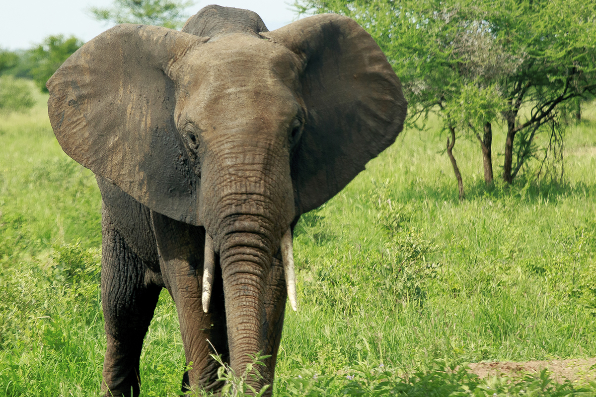 Nice Images Collection: Elephant Desktop Wallpapers