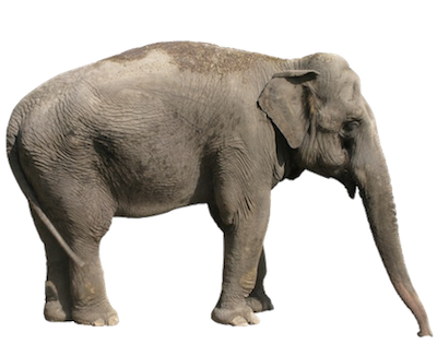 400x315 > Elephant Wallpapers