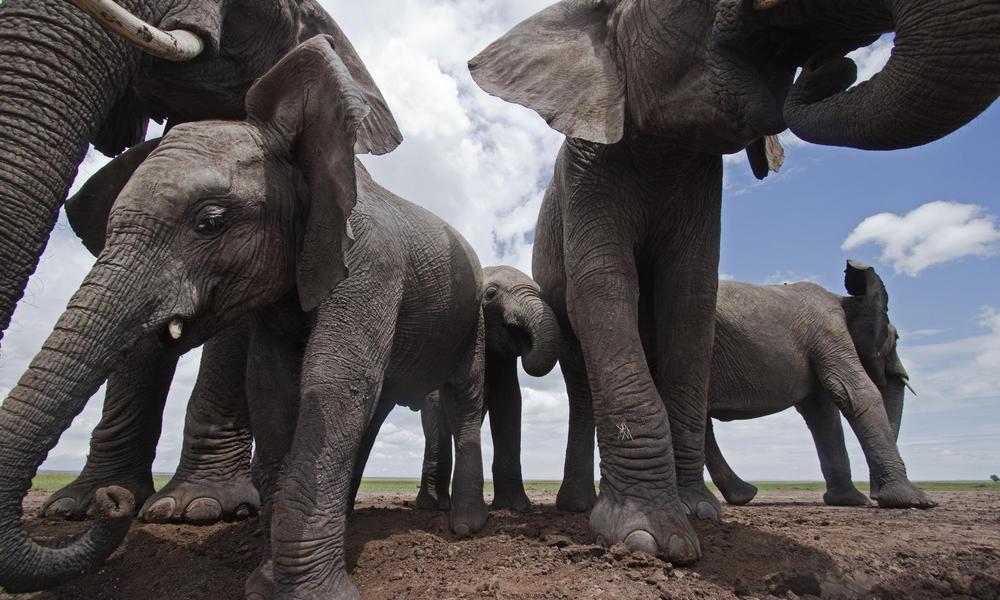 Elephant Pics, Animal Collection