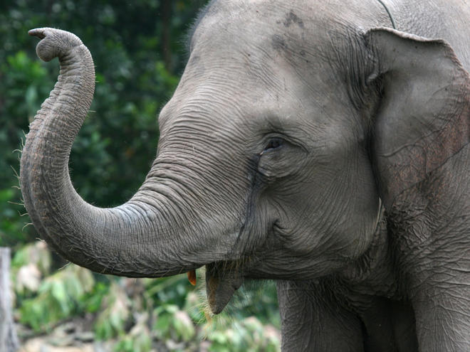 Elephant Backgrounds on Wallpapers Vista