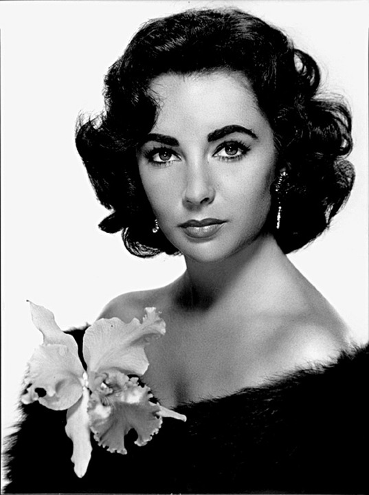 HD Quality Wallpaper | Collection: Celebrity, 537x720 Elizabeth Taylor