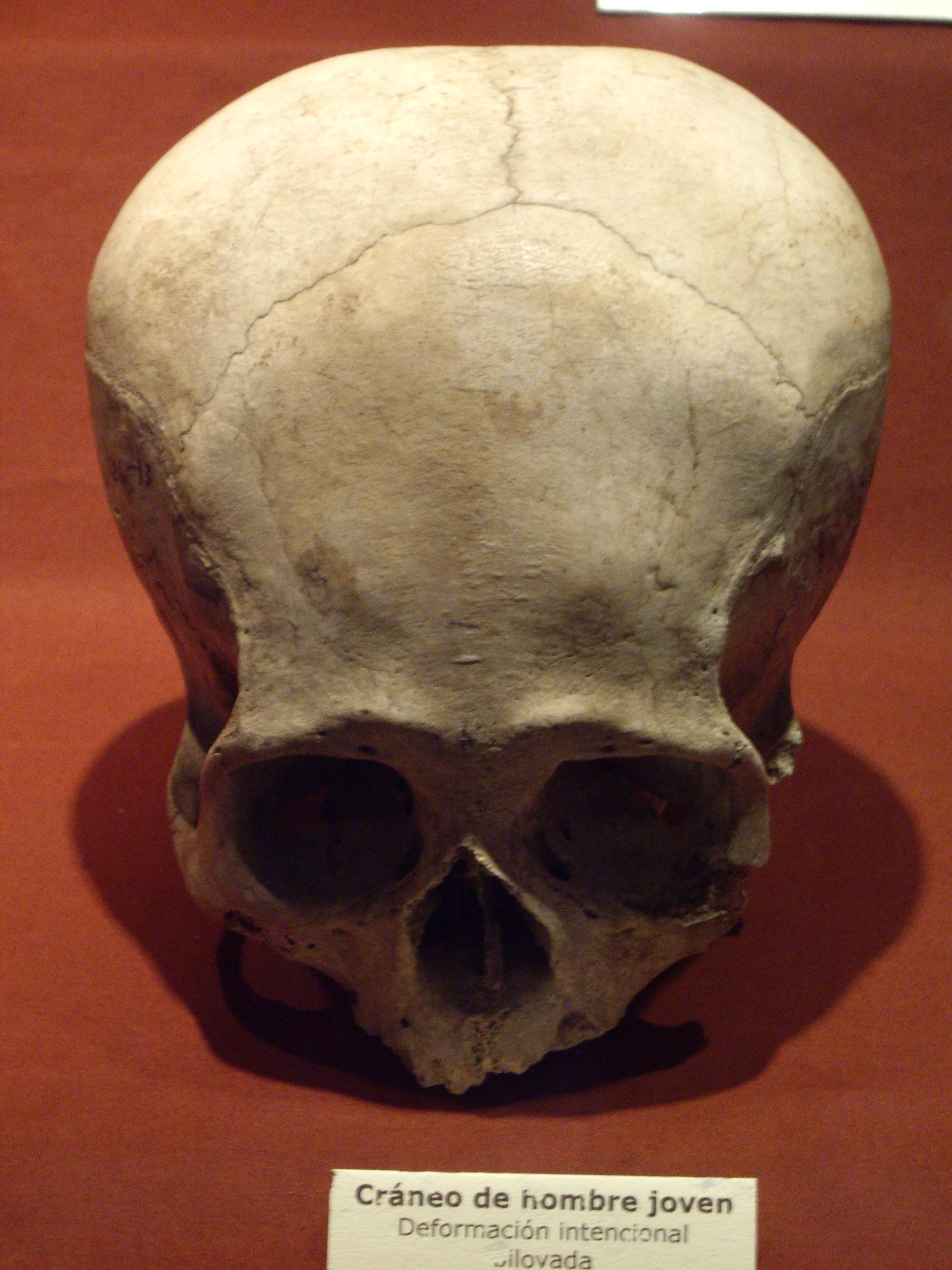 HQ Elongated Skull Wallpapers | File 1778.14Kb