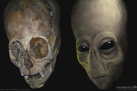 Elongated Skull Pics, Dark Collection