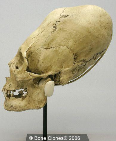 HQ Elongated Skull Wallpapers | File 24.69Kb