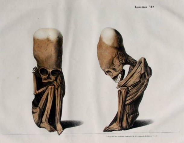 Elongated Skull Backgrounds on Wallpapers Vista