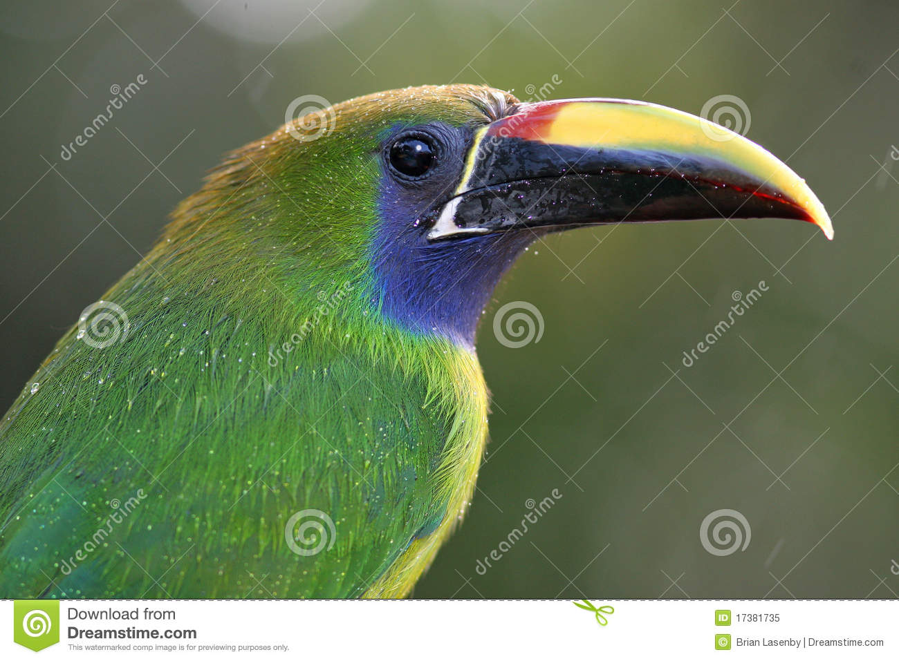 Emerald Toucanet Backgrounds on Wallpapers Vista