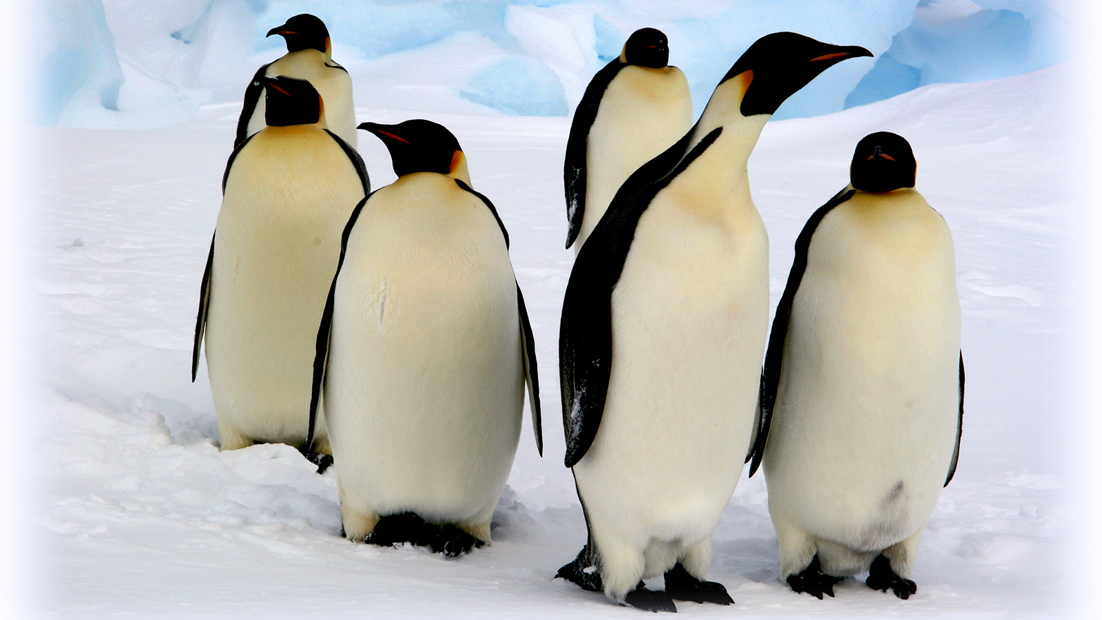 HQ Penguin Wallpapers | File 1089.02Kb