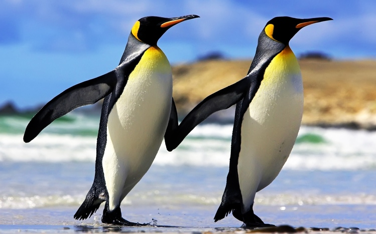 HD Quality Wallpaper | Collection: Animal, 749x468 Emperor Penguin