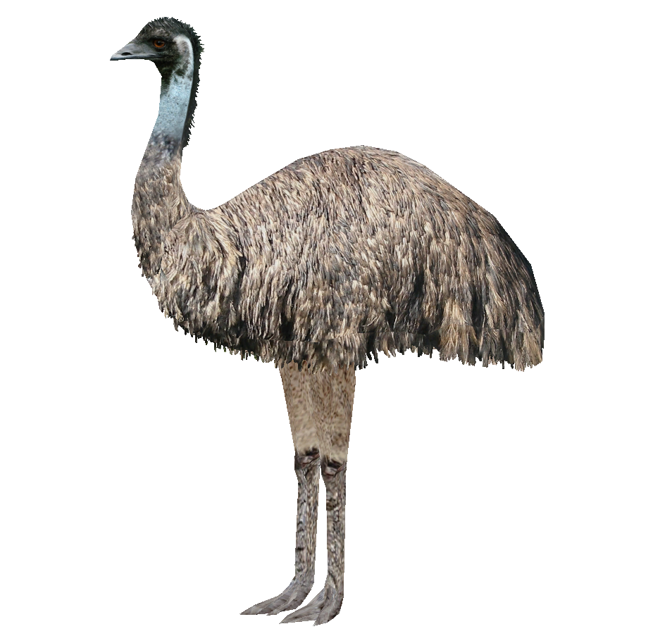HQ Emu Wallpapers | File 485.69Kb